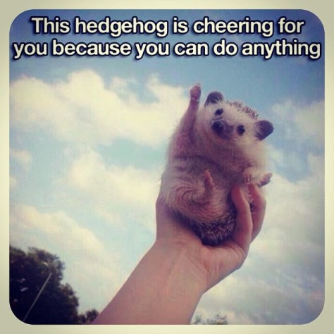 Hedgehog Brimming with Self-Confidence
